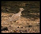 Mystery Bird Oct 05