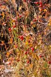 Autumn Colors - Sierra Nevadas