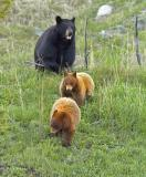 yellowstone_wildlife