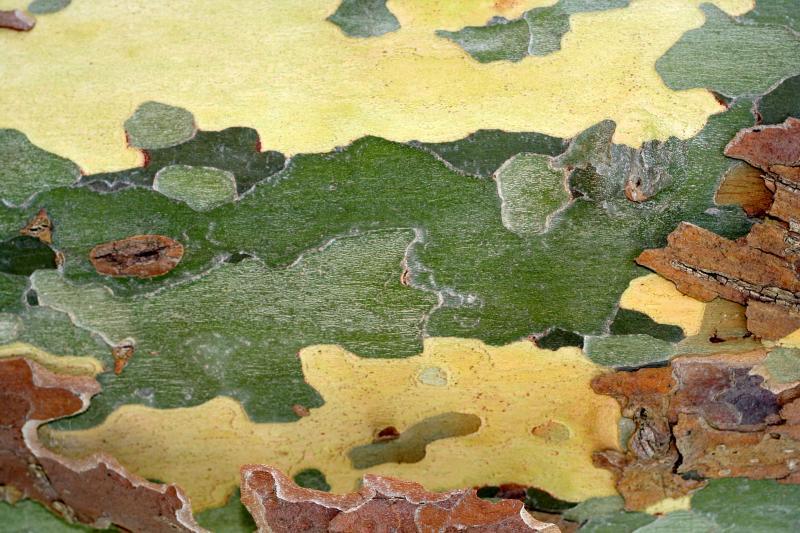 Tree bark spain dedicated to Rebeca Gilling