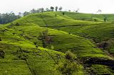 Kandy & Highlands