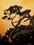 not a bonsai
