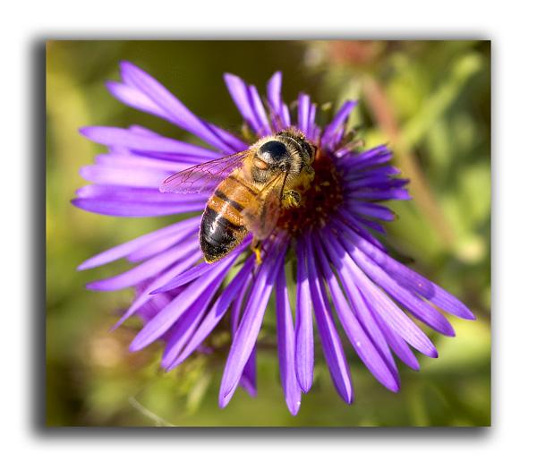 Sweet purple flower
