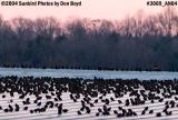 Birds warming up on warm roof on cold winter day stock photo #3069
