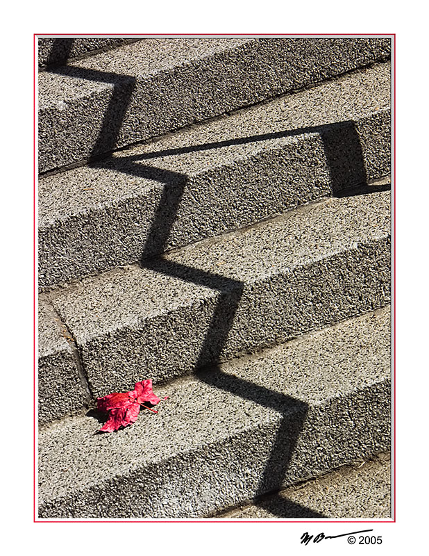 Red Leaf On The Stair