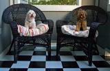 Puppy & Theodora