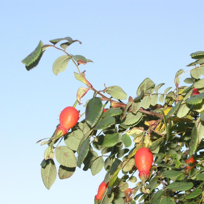 Mandarinnyper.jpg