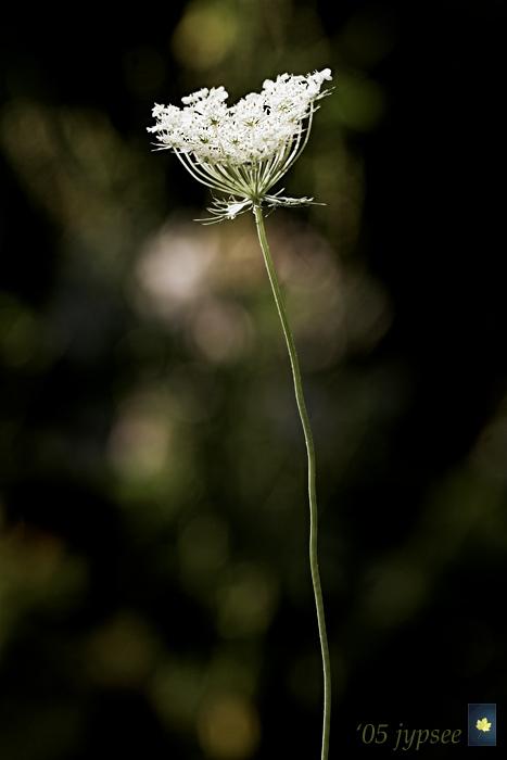 bouquet on a stem