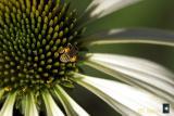 deep in the pollen
