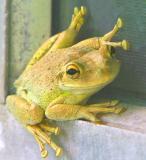 Mr.Froggie