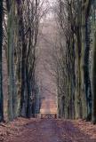 Dieren Forest