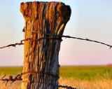 Beyond The Barbed Wire Fence