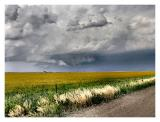 Yellow Daisies and a Wall Cloud