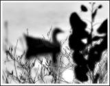 Shadow Swim