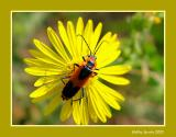 Yellow Flower - Red Bug