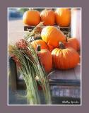 Autumn Harvest & Fall Beauty