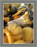 Gourd Study