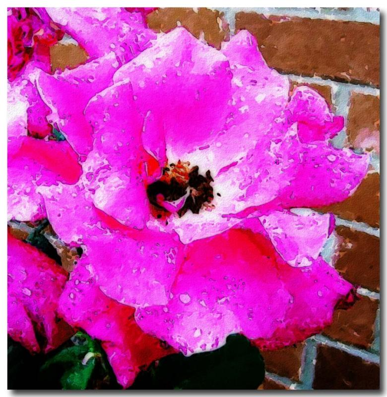 First-Rose2.jpg