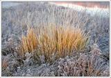 Sunrise Wild Grass