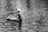 200mm bird test 049.jpg