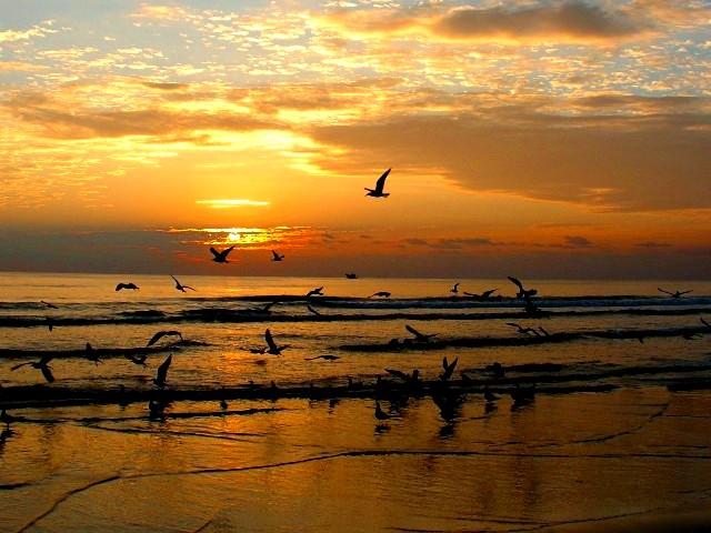 10-9-05 Gulls on BeachZ20.JPG