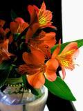 8-2005 Lilies2.JPG