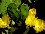 4-2004 Cactus Heart.JPG