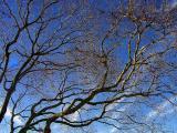 branches1204.JPG