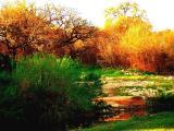 Salado Creek 3-2005.JPG