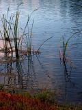 10-3-05 Pond2Z20.JPG