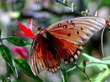 old butterfly.JPG