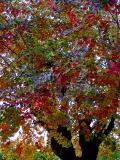 colorfultree2.JPG