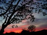 4-04-05 Morning light3.JPG