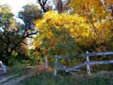 11-6-2005 Autumn Foliage1.JPG