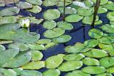 Weeds in water