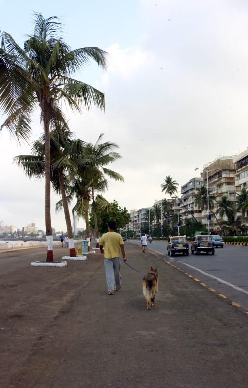 Marina Drive_Morning walk.jpg