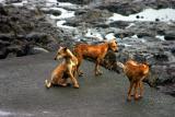 Haji Ali_Beach Dog.jpg