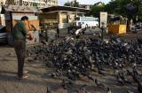 Gateway_Bird Feeding1.jpg