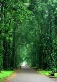 Entering the green tunnel