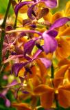 Bouquette of Orchid