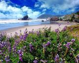 Lupine Beach