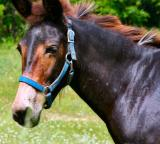 june 26 pony farm