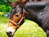june 26 pony farm 2