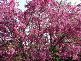 Descanso Gardens Japanese Festival 2005