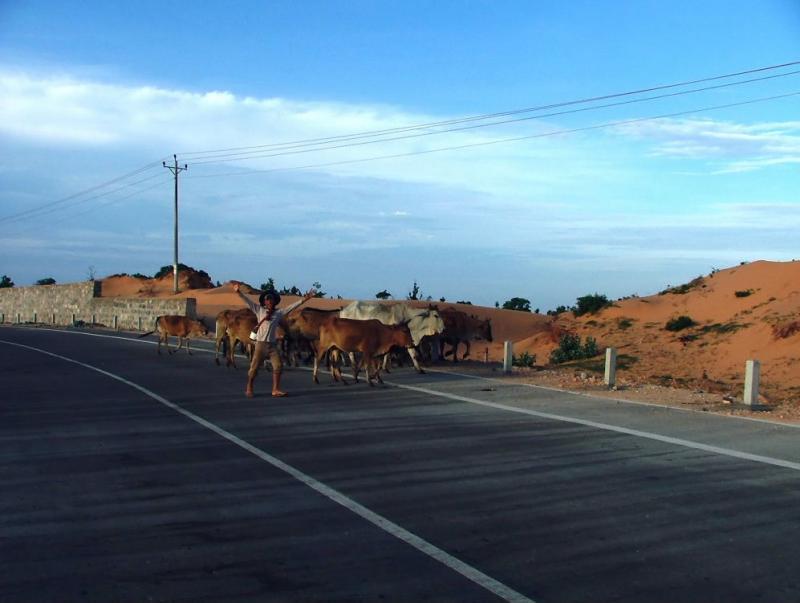 Happy Cow-Herd
