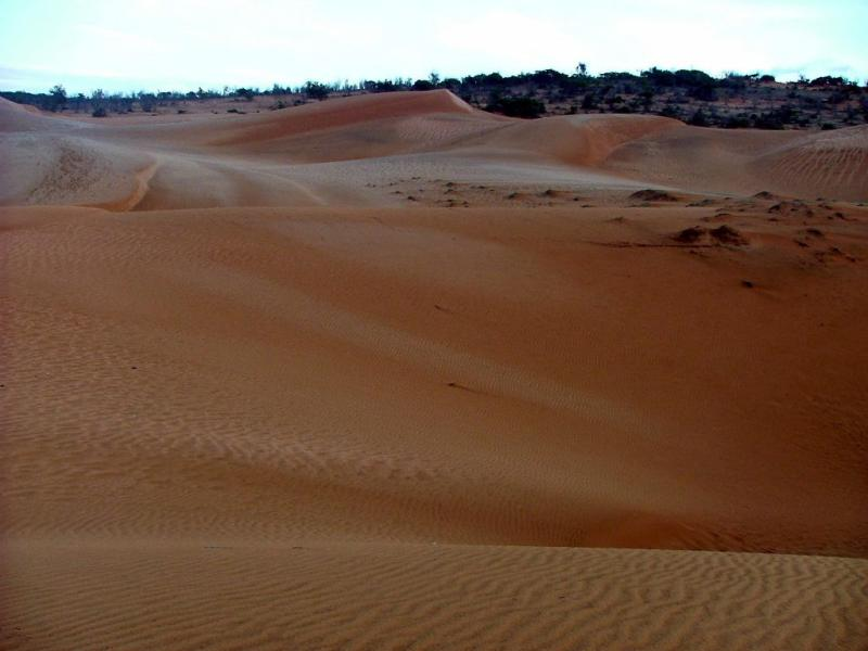 Red Dunes in the Morning
