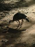 Shady Bird