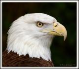 Eagle_D2X_2727.jpg