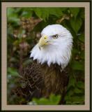 Eagle_D2X_2738.jpg