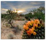 AZ-Sunset_D2X_7963.jpg